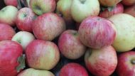 Apples in a 12kg box