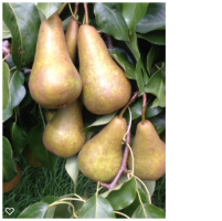 Pears & Nashis in a 10kg box