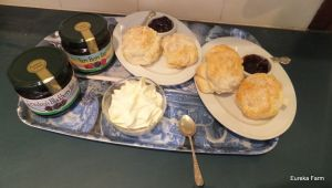 Nothing like a Devonshire Tea for trying our great jams.